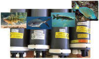 Data loggers of the Porpoise CSEM receivers used in this survey and their associated fish.